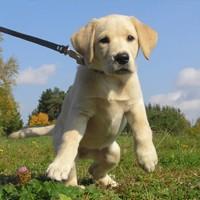 Cours de dressage de chiens