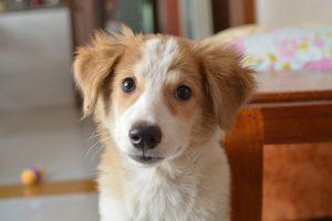 Accueillir un nouveau chien dans votre maison