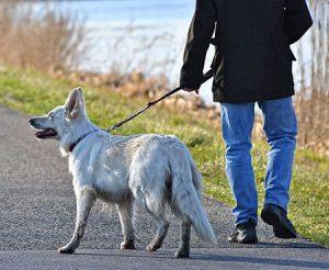 Apprendre à votre chien à marcher