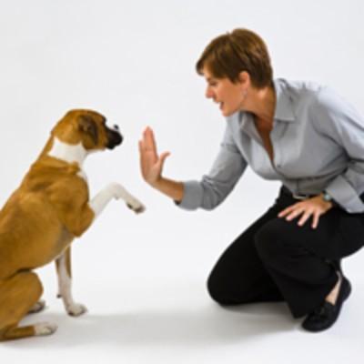 Comment choisir le meilleure comportementaliste canin pour chien