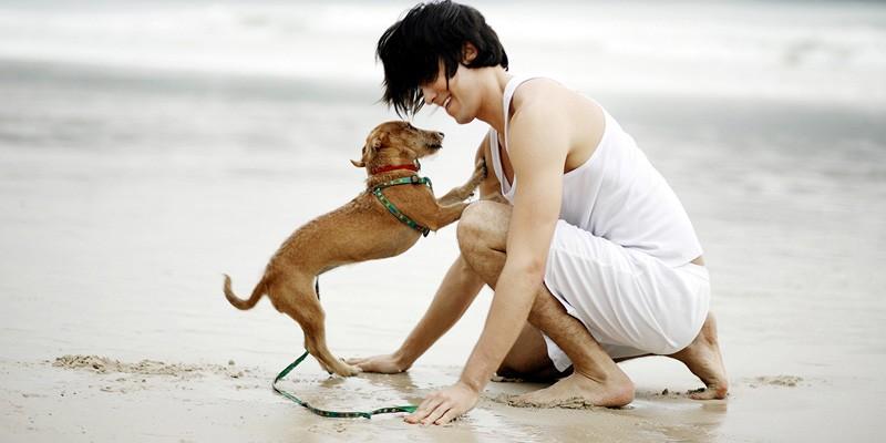 entraîner efficacement votre chien